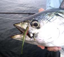 Directions to snowfly charters on block island for Block island fishing charters